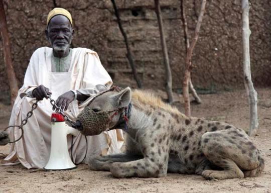 Dono posa com hiena com focinheira nesta sexta-feira (17) na cidade de Katsina, noroeste da Nigéria. É costume no país o uso de hienas e babuínos 'amestrados'. (Foto: Reuters)