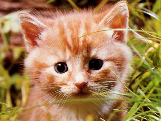 gatos-filhotes