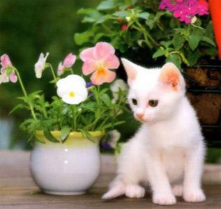 imagens-gatos-2