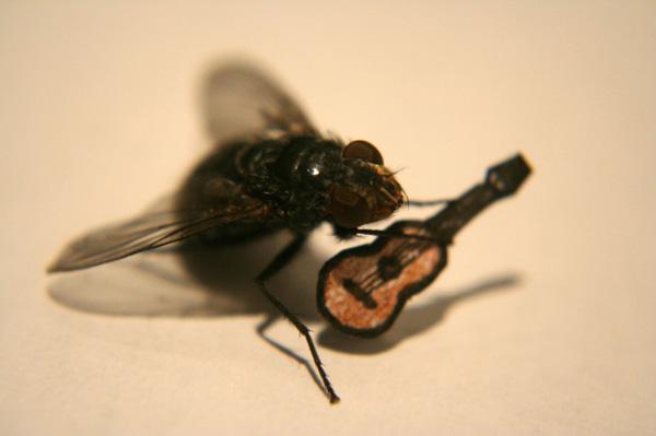 Resultado de imagem para mosca