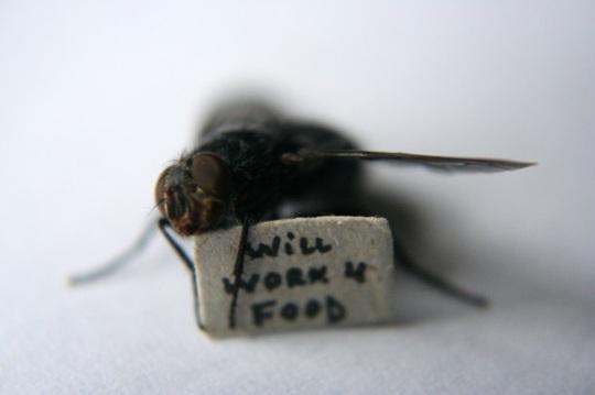 moscas-3