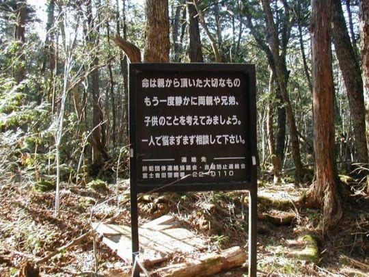 aokigahara_02
