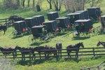 Amish_Buggies